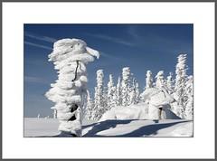 Fabelwesen...    (Mythical creature..) (alfred.hausberger) Tags: schnee snow ice forest eis wald bavarian bayerischer dreilndereck fabelwesen dreisessel schneeschuhwanderung mysticalcreatures weinter updatecollection