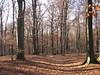 2011 Germany // Taunuswanderweg X von Braunfels nach Bad Soden (maerzbecher-Deutschland zu Fuss) Tags: trekking germany deutschland hiking natur bad x trail soden taunus wandern fuss zu wanderweg fus braunfels 2011 wanderwege fernwanderweg weitwanderweg maerzbecher taunuswanderweg deutschlandzufus deutschlandzufuss taunuswanderweg07 taunuswanderwegx