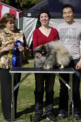 Pekingnese (Alexandra Kimbrough) Tags: show california dog miniature husky mini kai nordic claremont northern klee alaskan ukc conformation akk