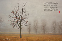 A tree & a poem (guizhou2012) Tags: trees texture fog landscape early spring nikon gloomy outdoor tombsweepingday memoriesbook