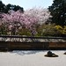 Cherry Blossoms, Rock Garden, Ryoan-ji Temple, Kyoto