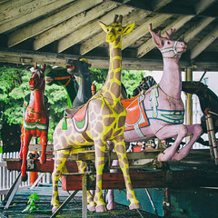 Candy Colored Animals (Austin Hudson) Tags: old color animal vintage carousel