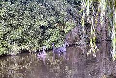 Dawlish (ag4651) Tags: water birds seaside
