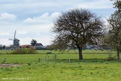 Molen in Wenum (Cor de Hamer (www.cordehamer.nl)) Tags: blue sky tree green mill clouds wolken boom fields molen veluwe weiland apeldoorn wenum