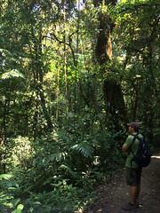 "La Réserve de Monteverde <a style=""margin-left:10px; font-size:0.8em;"" href=""http://www.flickr.com/photos/127723101@N04/26850849042/"" target=""_blank"">@flickr</a>"