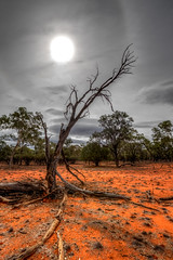 Dreams of Rain (robertdownie) Tags: new red sun west broken wales clouds dead death branch mt south central dry mount soil drought nsw outback bone aboriginal arid grenfell parched ngiyampaa wangaaypuwan