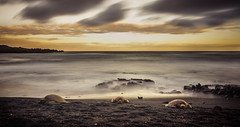 Relaxing on the Beach (Kiwi Tom) Tags: longexposure sunset sea beach clouds landscape hawaii sand turtles tomhall