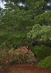 IMG_8682.CR2 (jalexartis) Tags: trees rain spring gloomy calm rainy reflective gloom ilikerain ilikegloomy