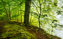 Water's edge (J C Mills Photography) Tags: morning light mist water landscape moss spring pond dale dam derbyshire peakdistrict may roots darley beechtrees beechleaves ladygrove