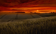 Orange glow (jamietaylor2127) Tags: uk orange clouds evening glow wheat scenic sigma30mm