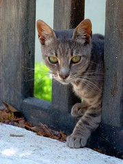 Cat and gate (Marite2007) Tags: portrait pet animals architecture cat wooden gate greece frame chora cyclades amorgos
