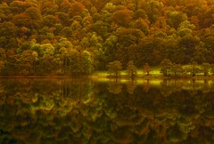 Grasmere Autumn Shore (Steve Thompson images) Tags: autumn trees reflection landscape grasmere lakedistrict cumbria hdr thelakes photomatixpro grasmerelake polarisingfilter ndgradfilter canon1585lens