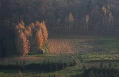 Polish Autumn (maciej.ka) Tags: above autumn sky forest landscape shots baloon poland polska polish aerial pologne