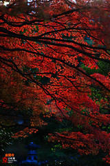 The Red Dance (fravenang) Tags: autumn fall japan temple kyoto