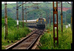 Green train in Green jungle (Vishal Khare) Tags: india green lines train canon temple is back long crossing shot state indian central platform tracks fast railway powershot southern jungle rails change express poles chennai andhra railways tamil zone balaji tirupati nadu pradesh livery irfca 16053 16057 royapuram wam4 sapthagiri sx10 wap1 arrakonam