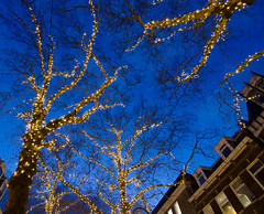 Delft's fairy lights (FrancoisMalan) Tags: christmas trees light tree lights bomen dusk delft strings lamps lichtjes