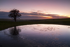 (drfugo) Tags: trees winter light sunset wild england sky cloud cold reflection tree green ice nature water field grass canon reflections landscape lights sussex countryside still pond hill smooth hills southeast eastsussex sleek southdowns dewpond ditchling ditchlingbeacon 18200mm canon18200mm