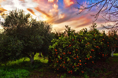 Orange and olive (Theophilos) Tags: trees sunset sky orange clouds garden olive crete rethymno     angeliana