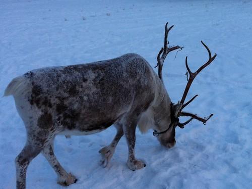 111208_Lappland_294