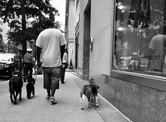 Walking the Dogs (B.G.S) Tags: new york nyc usa white black nikon nikkor manhatten 18200mm d90 vrii