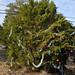 360_Trees_2011_067