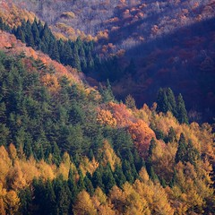 The Zigzags of Autumn in Japan (jasohill) Tags: city autumn trees light color japan forest japanese photo waterfall rainbow afternoon climbing trail iwate backgrounds    zigzag  mtiwate hachimantai   2011 jasohill   canon50d