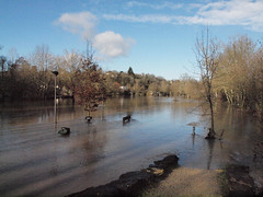 Civray (86), Flood plain (davidad64) Tags: floods charente civray poitoucharente