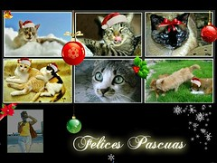 Para todos vosotros amigos y compañeros de esta pagina que compartimos la misma aficción y amor por la fotografia os deseo lo mejor, pero ante todo salud y paz (alma-81) Tags: mascotas pascuas felicitación