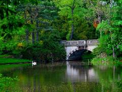In Wörlitz park (echumachenco) Tags: bridge trees green germany deutschland spring swan pond grün 1001nights brücke teich schwan bäume frühling sachsenanhalt wörlitz wörlitzerpark ringexcellence musictomyeyeslevel1