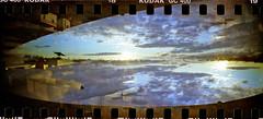 pigeon in flight (Duncan Creamer) Tags: panorama film lomo doubleexposure pano ishootfilm abstraction sprocketrocket