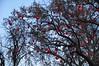 Wiener Christkindlmarkt (anuwintschalek) Tags: vienna wien christmas winter tree weihnachten austria december advent heart decoration christmasmarket puu herz baum decorated talv herzen christkindlmarkt 2011 viin jõulud nikond90 süda roteherzen sigma1770os südamepuu