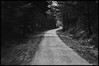 """wh3n the spring it says: """"th3 title of ____"""" (dtomaloff) Tags: road summer blackandwhite monochrome wisconsin lensbaby outdoors spring nikon path north be distance dt composer northwoods d90 minocqua davidtomaloff bearskintrail"""