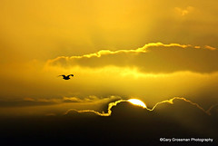 Silver Lining (Gary Grossman) Tags: ocean winter sunset beach nature sunshine clouds oregon photography heaven peace pacific northwest seagull gull sunny pacificnorthwest serene joyful cannonbeach sunrays heavenly lightanddark naturephotography silverlining northpacific endofday sunstreaks travelphotography landscapephotography winging dayisdone godsrays latedecember garygrossman northwestphotography doubleniceshot garygrossmanphotography tripleniceshot mygearandme mygearandmepremium mygearandmebronze mygearandmesilver mygearandmegold mygearandmeplatinum mygearandmediamond oregonimages