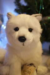 webkinz arctic fox 'Alaska' (Huskyplush) Tags: white alaska toy stuffed husky wolf soft plush arctic fox ganz webkinz webkinzarcticfox