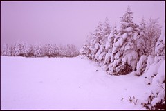 (✞bens▲n) Tags: winter snow film japan zeiss slide contax velvia carl g2 100 f2 45mm