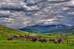 Crested Butte, Colorado (Thad Roan - Bridgepix) Tags: summer mountain green grass animal clouds fence landscape cow colorado cattle resort wildflower rach crestedbutte 201107