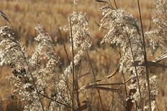 wind of change (Xilvia) Tags: countryside weeds change utopia