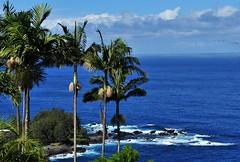 Hawaii Ocean View (cowboy6688) Tags: seascape hawaii oahu palmtree oceanview oceanfront blueocean hawaiiisland coastalscenery coastalline nikon2470mm nikond700