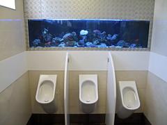 toilet-138 (manlio.gaddi) Tags: toilet wc vespasiano gabinetto pisciatoio waterclosed