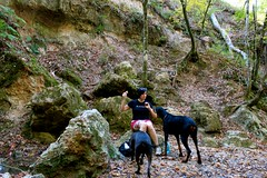 Oh no you di'n't ! DAT'S MA FOOD, DAWG ! (Angie Antimatter) Tags: autumn trees dog tree fall dogs nature leaves louisiana hiking boulder pitbull trail hiker doberman