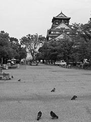 Memories of Osaka-jo (AnotherSaru - Off and on for a few weeks) Tags: blackandwhite bw castle japan pigeons courtyard   nippon osaka hato  nihon reconstruction    sakaj   honsh   kansaichih  kinkichih sakafu ozakaj