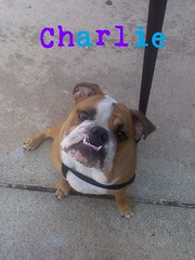 "Charlie • <a style=""font-size:0.8em;"" href=""http://www.flickr.com/photos/73968363@N02/6677098385/"" target=""_blank"">View on Flickr</a>"