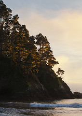 Trees on Bluff, Russian Gulch State Preserve, Mendocino, CA (Sudheendra Kadri) Tags: california trees sunset nature water canon landscape waves mendocino sudhi goldenlight landscapephotography seach canon5dmarkii sudheendrakadri sudheendrakadricom russiangulchstatepreserve
