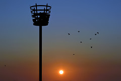 SUNRISE JOIE DE VIVRE (DESPITE STRAIGHT LINES) Tags: sky canada birds sunrise fun flying bc flock beacon sidney goldenhour starlings joiedevivre thegoldenhour beaconavenue nikond700 ilobsterit