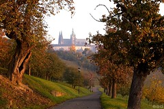 Autumn morning at Petrin / Podzimn rno na Petn (Jirka Chomat) Tags: morning flowers autumn tree green castle church sunrise garden way czech prague cathedral bluesky praha praskhrad autumncolors czechrepublic bohemia strom hrad petrin zahrada kostel podzim cesta praguecastle petn katedrla zelen thetemple chrm svtn rno modrobloha podzimnbarvy