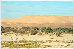 Libya (Marco Di Leo) Tags: africa sahara desert libya deserto libia libye libyen germa fezzan garama ليبيا líbia libie libië fizan リビア liviya libija 利比亞 الصحراءالكبرى либия לוב aṣṣaḥrā´ 리비아 ливия ลิเบีย lībija liibüa λιβύη лівія லிபியா 利比亚 لیبی लीबिया ሊቢያ liibua λιβuη لیبیا fizzān assahra´ جرمة ประเทศลิเบีย ლიბია ލީބިޔާ لېبيا লিবিয়া ליביע ලිබියාව liwiýa líbýa