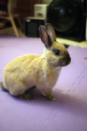 兔-NANA_36