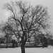 """Tree in winter - B&W • <a style=""""font-size:0.8em;"""" href=""""http://www.flickr.com/photos/54152770@N05/6723677135/"""" target=""""_blank"""">View on Flickr</a>"""