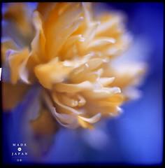 Mamiko Konishi :// the_earth / all / (cityfolk) Tags: charity flowers art nature beauty japan magazine book earthquake experimental creative exhibitions benefit citypulse madeforjapan