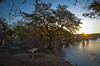Here I am . . . (jeffwspencer.com) Tags: park sunrise texas roundrock cedarpark brushycreeklake nikond7000hdr
